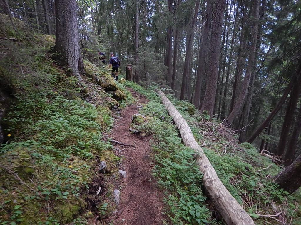 Runter durch den Märchenwald